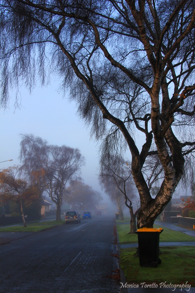 Fog blanketed Invercargill recently, making this tree and wheelie bin on Melbourne Street look almost magical. June 2013.