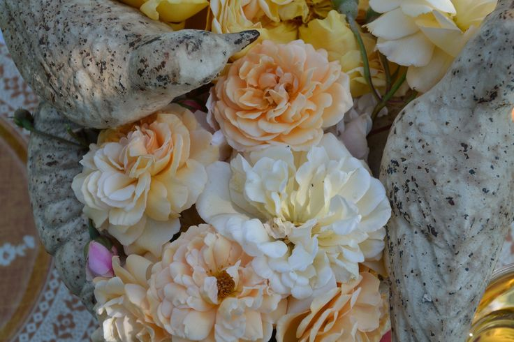 The antique roses of the garden  www.florencewithaview.com
