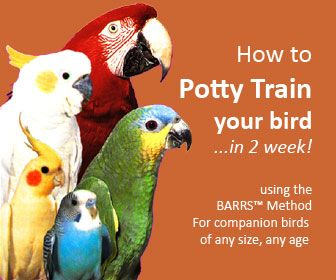 How to Potty Train a Bird
