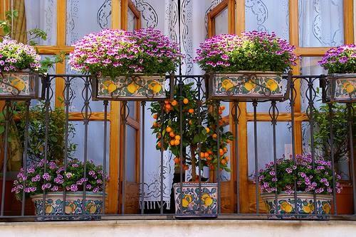 Balcone in fiore ~ Taormina