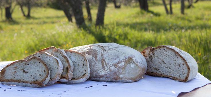 Come nascono il pane toscano e il lievito naturale (parte 1)