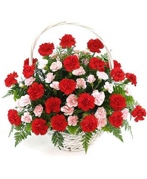 Thanksgivings Flowers Basket, 33 red carnations and 15 pink carnations - florist China online