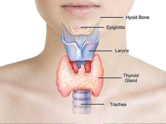 Los problemas de la tiroides son relativamente común. Los 3 más frecuentes son: el hipotiroidismo, el hipertiroidismo y nódulos tiroideos.