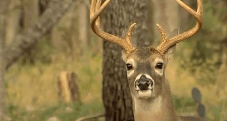 texas deer hunting