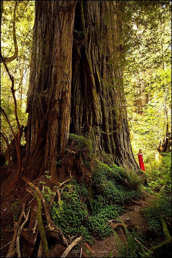 54 best redwood coast images on pinterest northern california