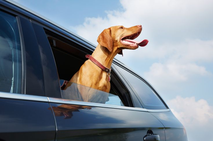 For many drivers, a bad odour can make a car unpleasant to drive. Their car might be in perfect working order and have many more years left, but if it smells terrible once they get behind the wheel, they'll dread using it.