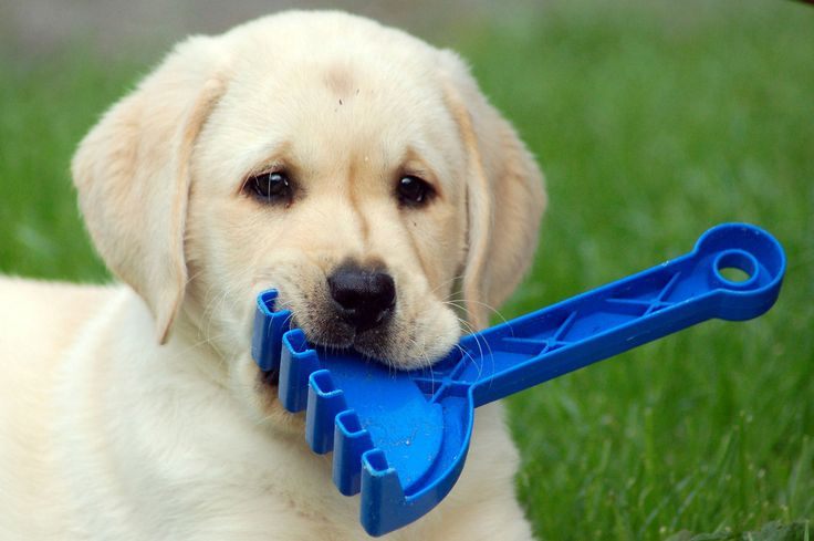 Dog and puppy trick training and obedience - My Puppy Club - http://www.mypuppyclub.net