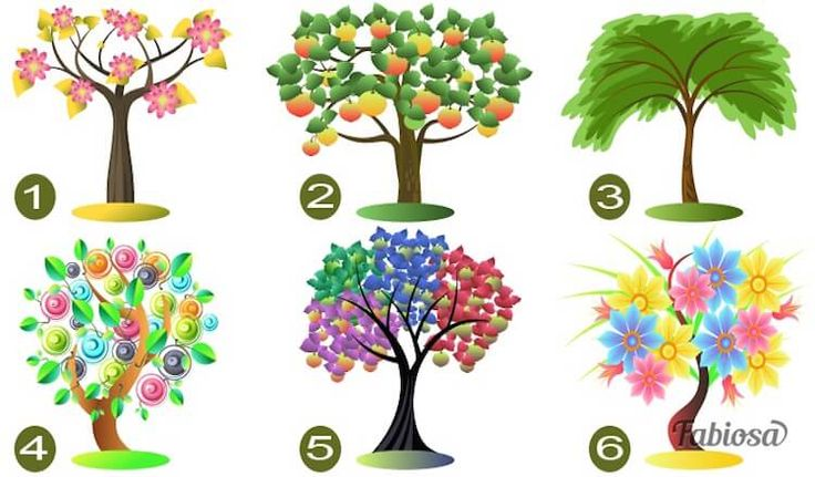 Тест: Выберите дерево, и мы расскажем тайны вашей личности