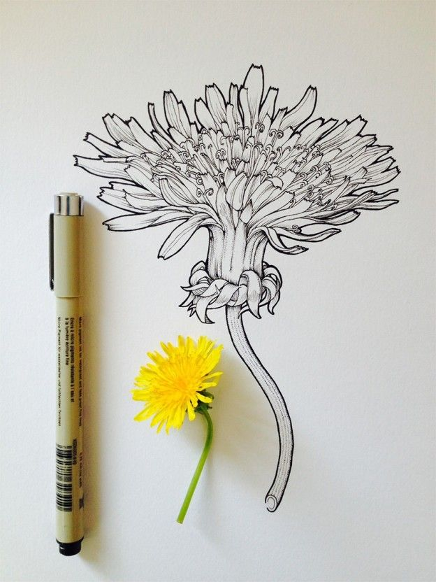 Scientific illustrator and artist Noel Badges Pugh has an incredible knack for drawing flora and fauna. He recently illustrated an entire field guide about bees and keeps a regular Tumblr, Art in Progress & Completion, where he posts these tantalizing drawings of buds and blooms.