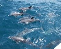 Go on a dolphin cruise on your next Myrtle Beach Vacation!