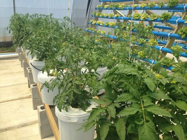 1000 images about bucket aquaponics on pinterest container gardening hydroponic systems and - Hydroponic container gardening ...