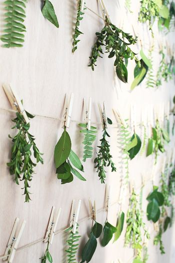 色々な植物を、少しづつ壁にハンギング。麻ひもにウッディ―な洗濯ばさみで止めるだけなのでお手軽です。植物の一期一会の生命力を楽しんでみては。