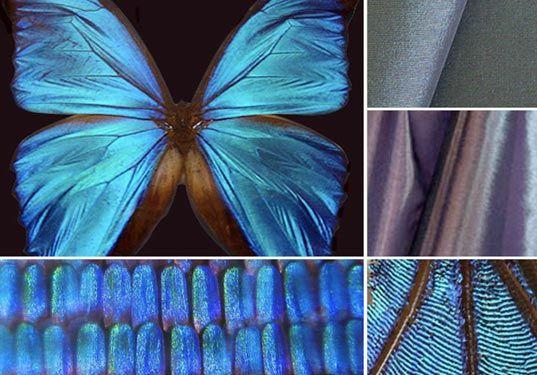 asknature.org, biomimicry, biomimicry techniques, sustainable design, organic design, green design, sustainable architecture, green building techniques