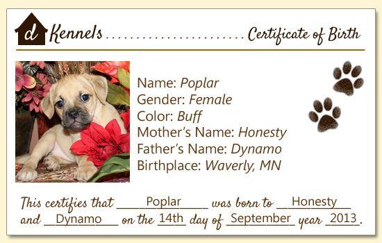 1000+ ideas about Birth Certificate on Pinterest | Births ...