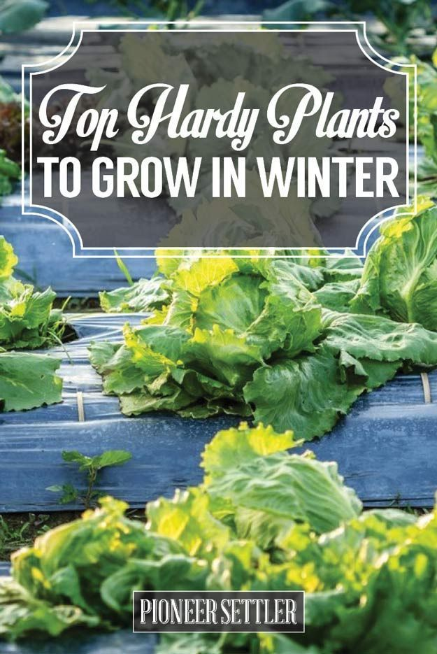 Top Hardy Plants To Grow In Winter Gardens Plants And