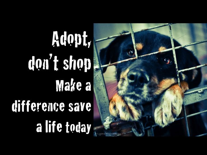 Adopt, don't shop.  Make a difference, save a life today.  © Jo Lyons Photography