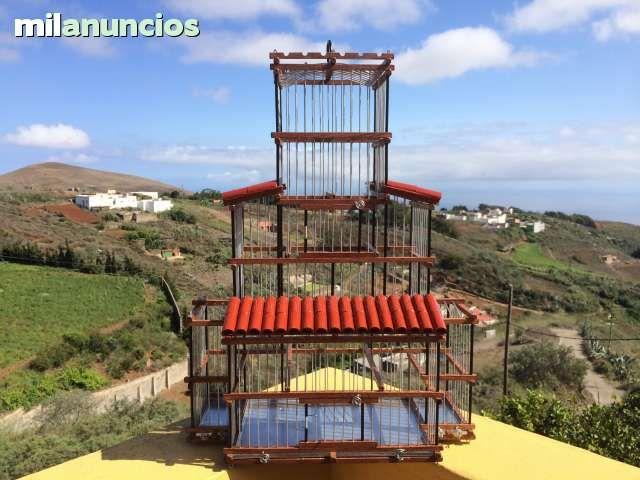 MIL ANUNCIOS.COM - Jaulas. Compra venta de pajaros jaulas. Anuncios con fotos de pajaros. Comprar un pajaro. Todas las razas de pajaros.