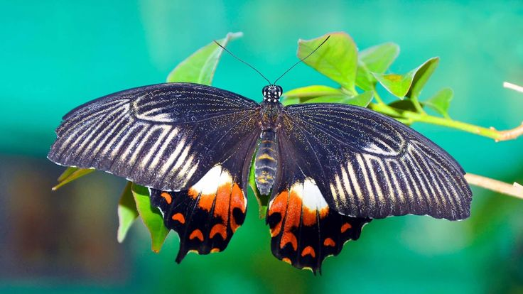 Фото: Tropical butterfly. #butterfly #insects #macro #nature Full size pics can…