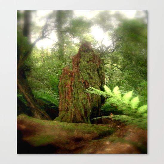 Stump, Forest, Ferns, Nature, Landscape, Soft Focusing, Otway Ranges, Australia.