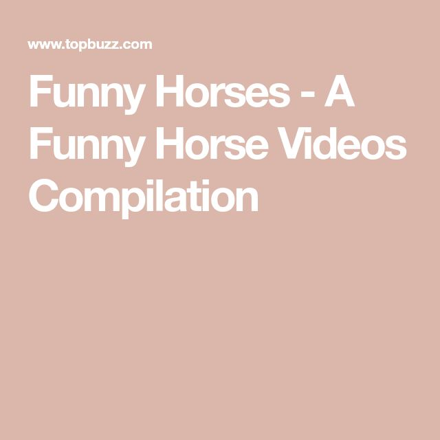 Funny Horses - A Funny Horse Videos Compilation