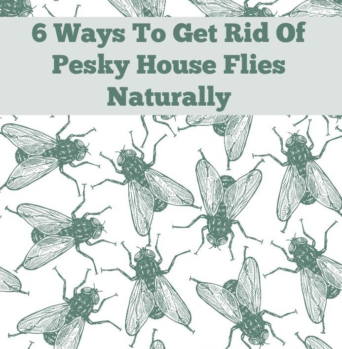 """Essential Oil Room Spray to get rid of pesky house flies naturally: """"Lavender, eucalyptus, peppermint, and lemon grass essential oils can be mixed together to create a powerful fly-be-gone spray. Spraying this mixture all over your home will keep the flies from wanting to get in."""""""