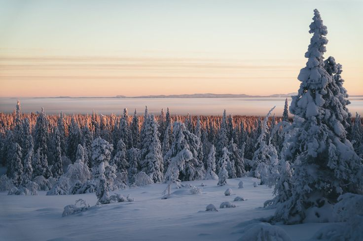 Winter vibes in the #Riisitunturi National Park in #Finland. Photo: Hannes Becker - Visit Scandinavia (@GoScandinavia) | Twitter