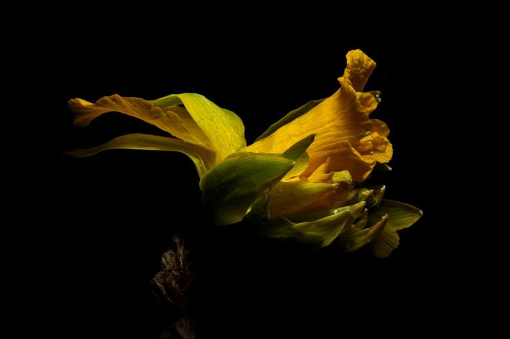 convoluted daff 4 by gregverena on 500px
