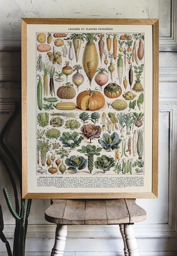 Kuriosis Vintage Posters Prints Largest Collection In Berlin In 2020 Botanical Prints Decor Botanical Prints Poster Prints