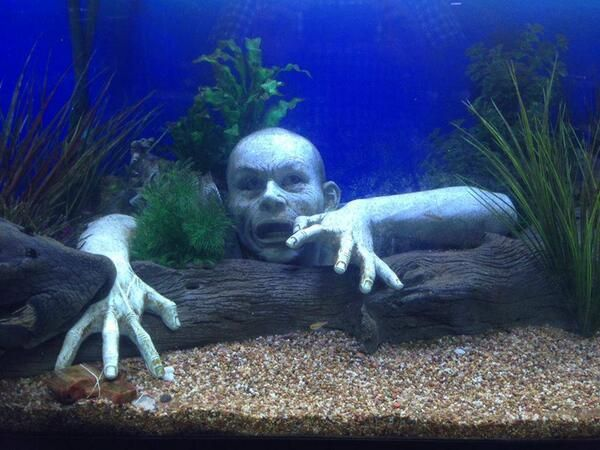 19 best fish tank ideas and things images on Pinterest Plants - halloween fish tank decorations
