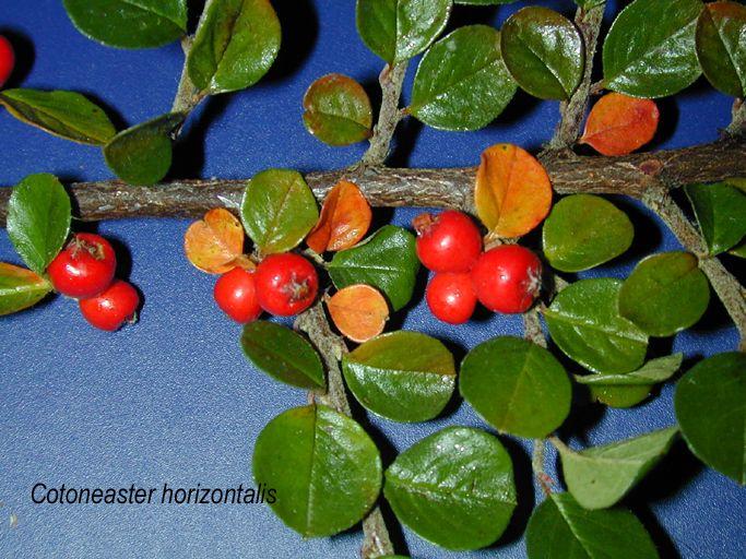 fruit.jpg (683×512)