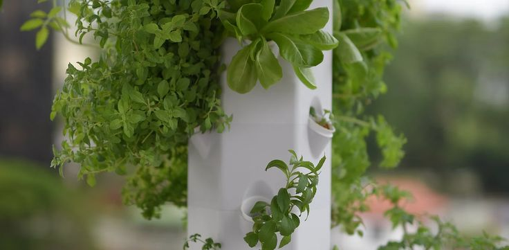 Aerospring Gardens' patentpending vertical aeroponic gardening system makes it possible to discover the urban gardener in you! Grow your own food!