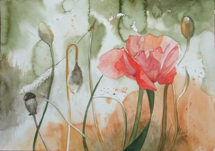 Klatschmohn / Poppy (c) #watercolor by Frank Koebsch, 29,5 x 42 cm, sold