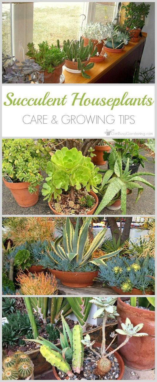 how to take care of succulents plant
