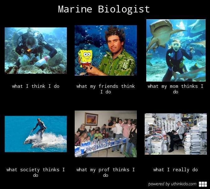 marine biology quotes | marine meme http uthinkido com what people think i do gallery job