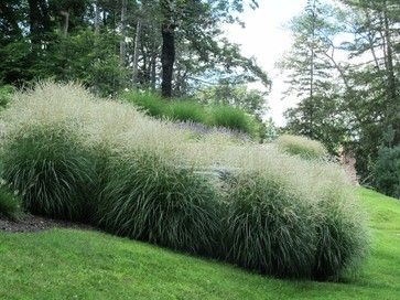 Property line maiden grass plant farther apart to not for Maiden grass landscaping ideas