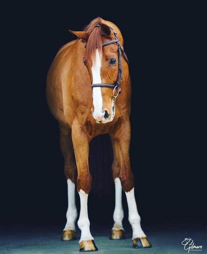 Pin von rsde.rsde auf horses | Tiere, Pferde, Pferd