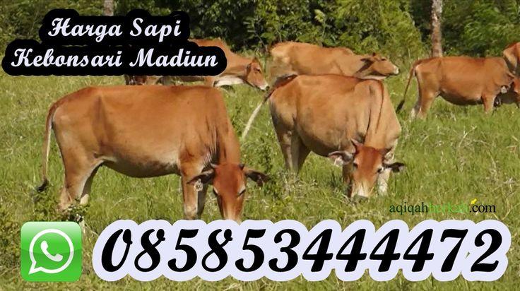Harga Sapi Qurban di Kebonsari Madiun / 085853444472
