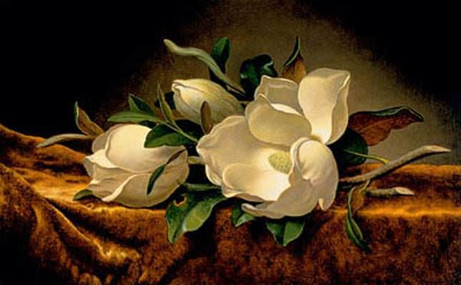 Magnolias on Gold Velvet Cloth Prints by Martin Johnson Heade at ArtPrints.com