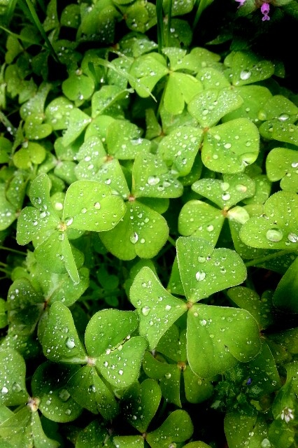 Verde freschino