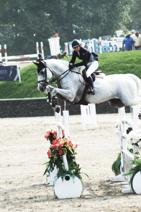 show jumping. Gorgeous grey.
