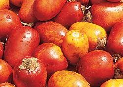 Maná - fruta brasileira, originária da Amazônia. É  rica em cálcio, fósforo e vitamina B3. Podem ser usadas em doces, geleias e sorvetes.