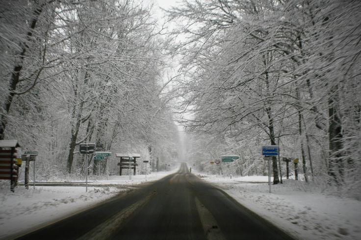 Droga do Białowieży...