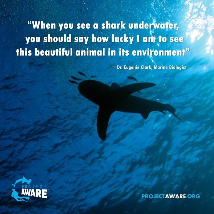 Best Sharks Images On   Sharks Shark And Shark Week