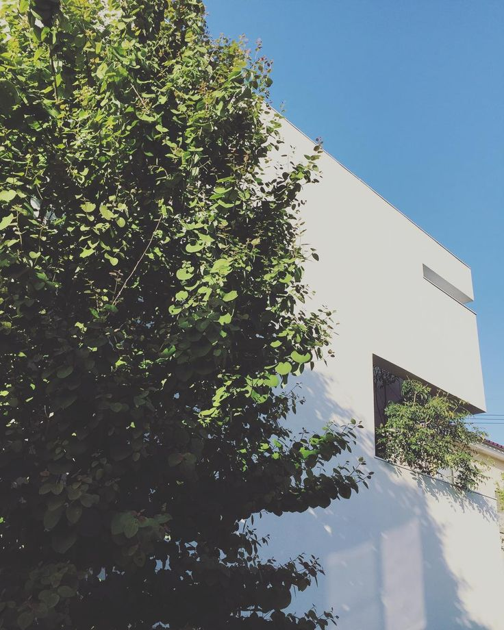 外観デザインに一役買っているシマトネリコ。 全体を壁で覆っているため、室内から外を見れる大きなスリットは二箇所。設計段階で、その内の一つからシマトネリコが顔を出す建物と植栽を融合させたプラン。外から室内が見えないように(特に夜など)緑の目隠しにもなっています。室内からはピクチャーウィンドウとして、外からは外観デザイン、目隠しにと1本の木が何役もこなしてくれています✨ #マイホーム#マイホーム完成 #マイホーム記録 #建築家とつくる家 #注文住宅 #外観デザイン #植栽#カツラの木 #シマトネリコ#白い家 #ミニマルデザイン #myhome #instahome#architecture