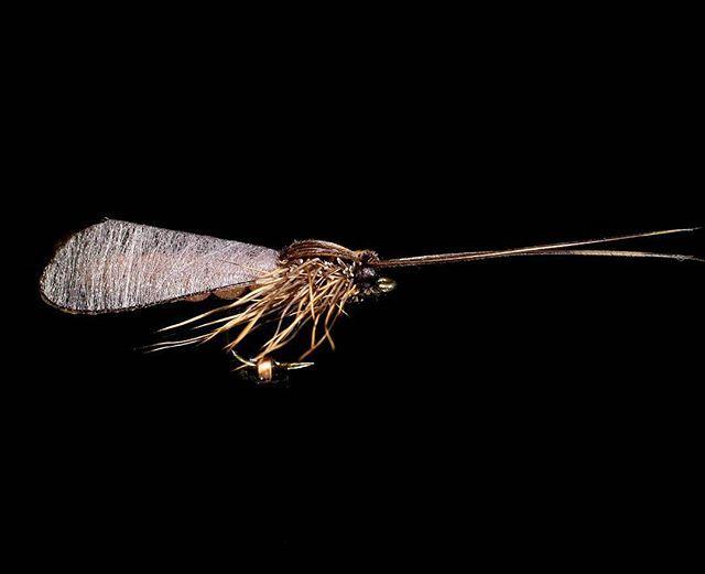 Did get back to tie my favorite flies, caddisflies. #flugfiske…