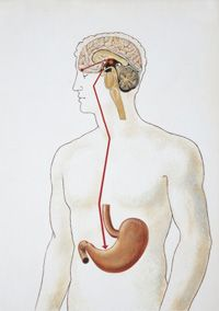 Are your health issues caused by your gut? Metabolic testing takes the guesswork out of naturopathic treatments | Integrated Medicine Institute, Graeme Bradshaw