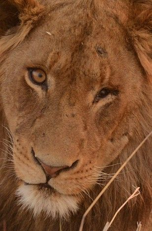 Wilderness Safaris camp and company news updates