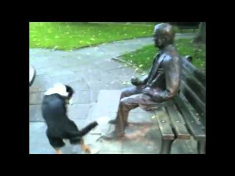 dog wants statue to play fetch with him