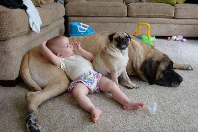 bebelusi si animale 21