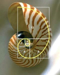 Si te parece interesante este artículo puedes votarlo en Menéame: Curiosidades sobre los números de Fibonacci en Menéame Tanto la sucesión de Fibonacci $latex F_n$ como el número de oro o número aúreo $latex phi$ poseen multitud de propiedades y relaciones. Algunas son relativamente evidentes y ot